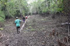 Kukama community leaders walk along the pipeline through a marshy area. (Photo: Barbara Fraser)